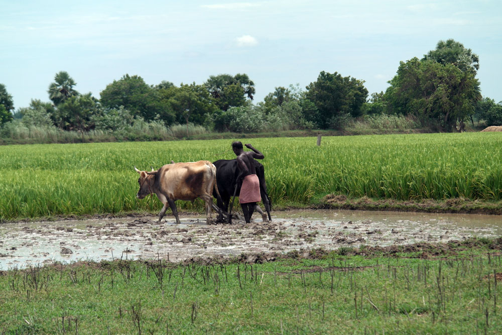 Free Photos - Nature - Paddy fields at Tamil Nadu