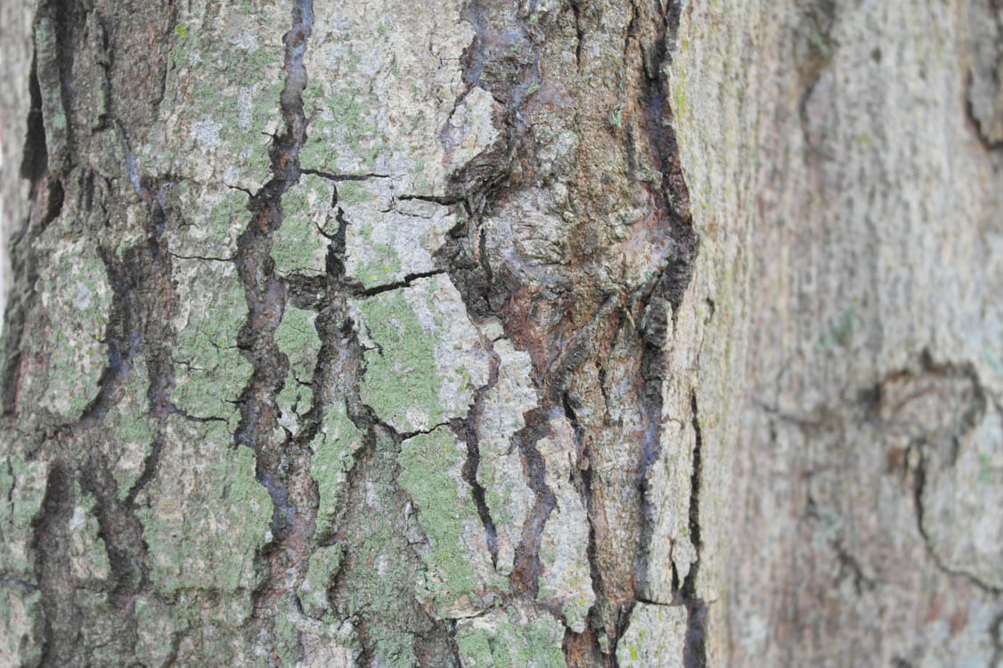Free Photos - Textures - Wood Texture